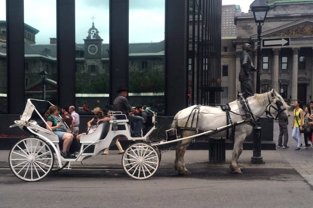 Caleche Horse Montreal