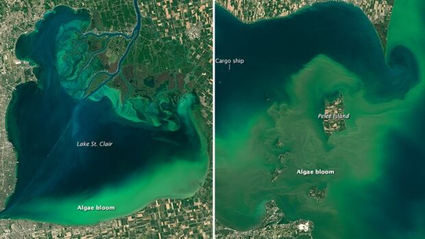 the Operational Land Imager (OLI) on Landsat 8 captured these images of algal blooms around the Great Lakes. The bloom is visible in Lake St. Clair, left, and Lake Erie, right.