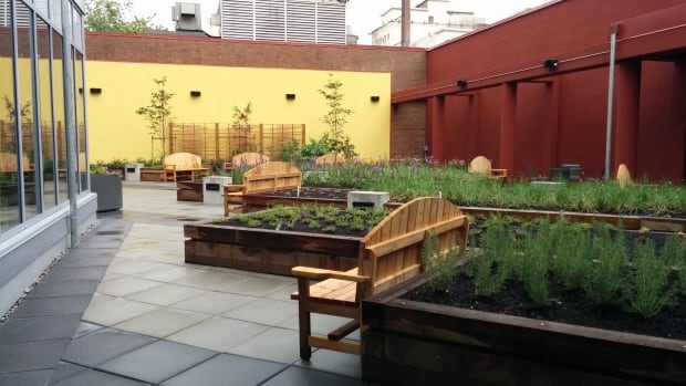 The communal roof garden at a new affordable housing development in Vancouver's DTES.