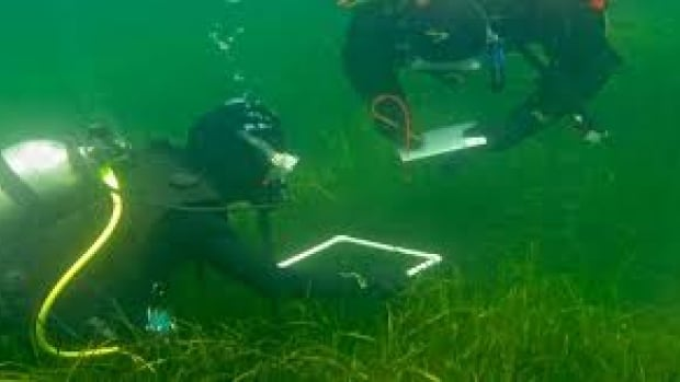 Divers monitor eelgrass in Port Mouton in 2012.