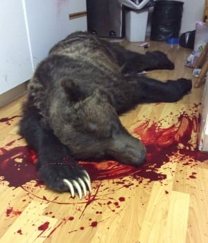 Grizzly bear shot in Kimberly home