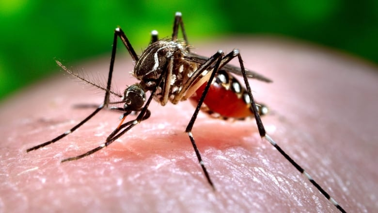 Toronto confirms first human case of West Nile virus this year