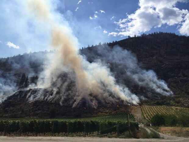 Oliver BC wildfire Aug 16 2015 smouldering wine crops