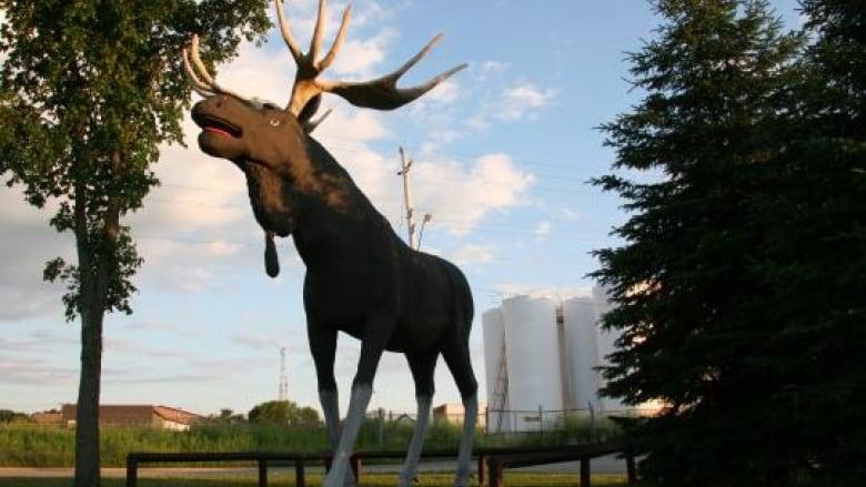 Looking good moose jaw