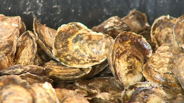 RCMP suspect the oysters have either already been sold or have been put back in the water somewhere else for later harvesting.