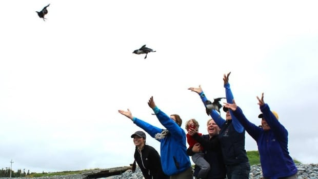 After rescuing puffins who have become disoriented and moved inland, people release the tagged birds back into the wild from the shores near Witless Bay.