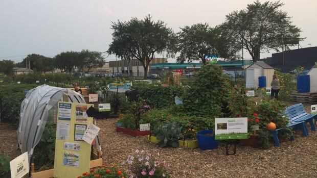The Saskatoon Food Bank and Learning Centre's community garden is called the Garden Patch.