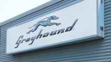 sudbury greyhound