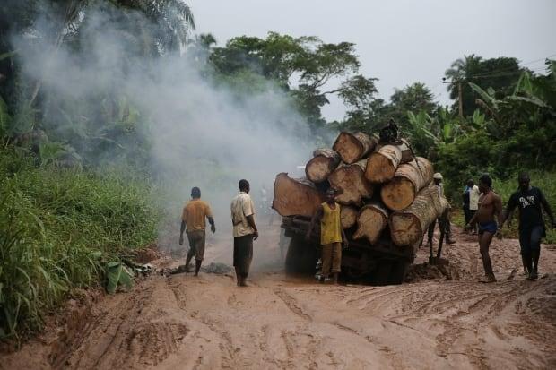 NIGERIA-LOGGING/