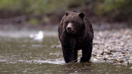 SPRAY: Simple advice for using bear repellent in a can