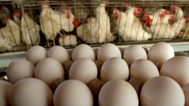 The World Health Organisation considers fipronil to be moderately toxic and says very large quantities can cause organ damage.