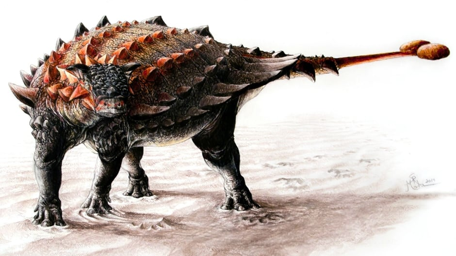 Ziapelta, an ankylosaur with a fully developed tail club.