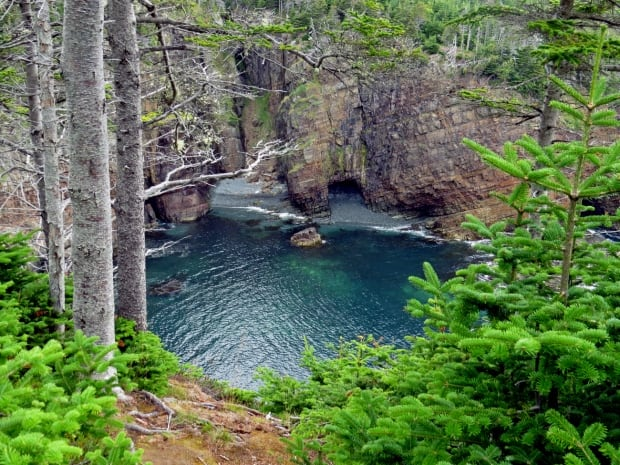 Stiles Cove hiking trail by Ferne Williams