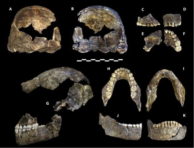 homo-naledi-skull-jaw