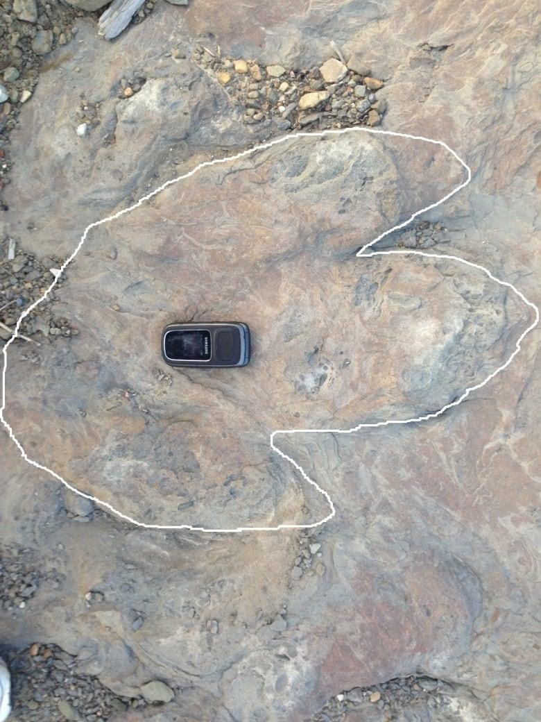 Rare dinosaur footprint found near Tumbler Ridge, B.C.