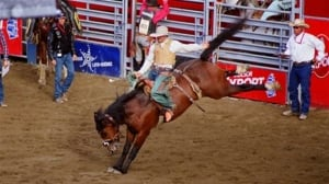 Protests planned as Montreal's birthday rodeo begins