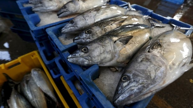 A report this weeks says that since 1970, half of all marine fish have disappeared, scooped out by over-fishing and killed by pollution, habitat loss, acidification ... the list of assaults goes on. It predicts dire consequences for the planet if the trend isn't reversed.