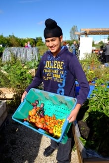 Students helped pick veggies from the Winnipeg Harvest food garden. The vegetables will be distribut