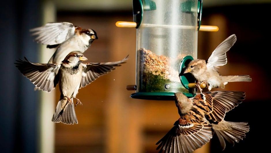 Songbirds flock around a bird feeder.