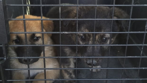 On one of their previous rescues, CC RezQs saved these two puppies on a reserve near Regina.