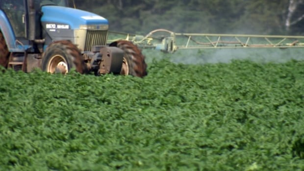 Planting the Innate Generation 2 potato could mean much less spraying of pesticides.