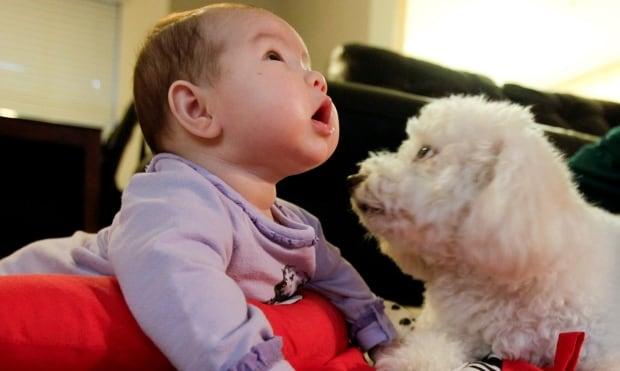 Pets Babies