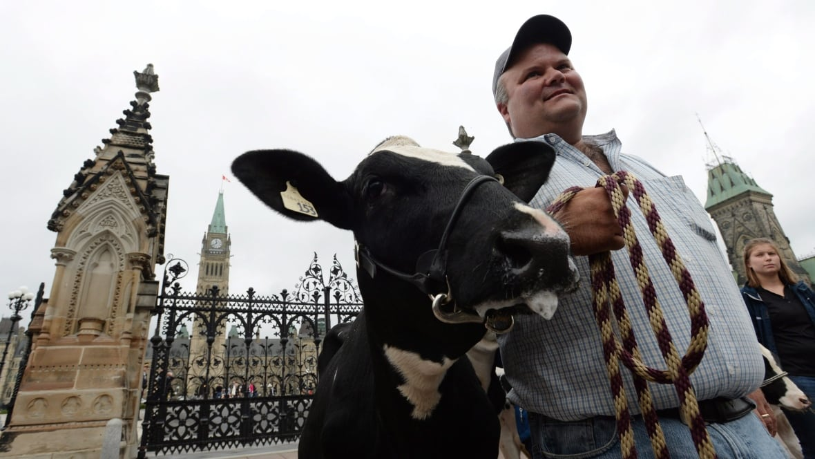 'Americans should worry' about Canadian dairy after TPP, New Zealand farmer says