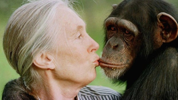 Jane Goodall will receive an honorary doctorate in Winnipeg this fall.