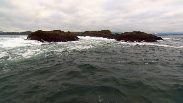 Gooseneck barnacle rocks