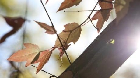 image of winnipeg fall weather