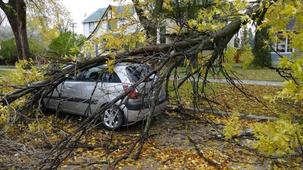 A tree crashed down on a car at Ash Street and Corydon Avenue on Monday.