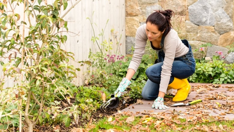 Even Though Many Gardens Across B.C. Are Going Dormant For Winter, There  Are Plantings You Can Do To Keep Your Green Space Inspired. (Shutterstock)