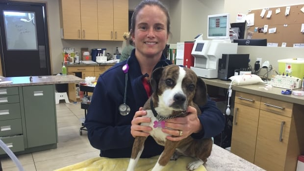 Dr. Katie Van Sluys says too many pet owners are opting not to vaccinate their dogs and that's causing a rise in the number of cases of parvovirus - a life threatening, but preventable, disease.