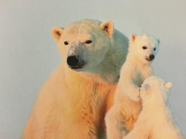 Polar bears 5