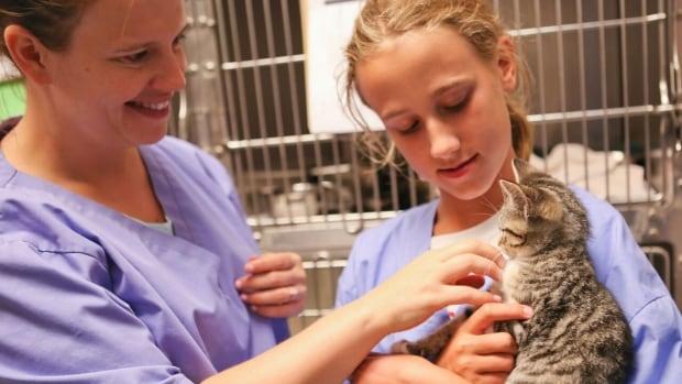 Veterinary education - Wikipedia