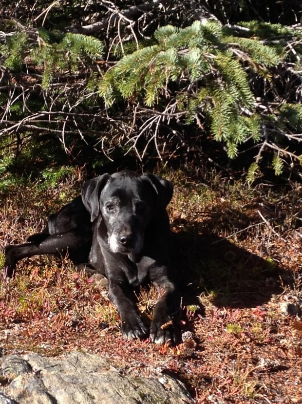 Boris the dog found after 18 days lost in the bush