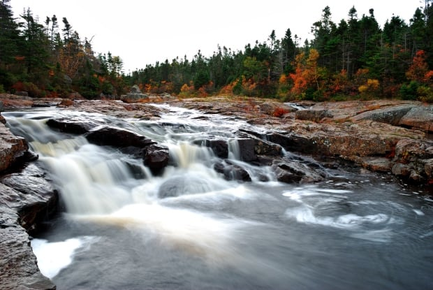 Fall on Manuels River by Gus Byrne