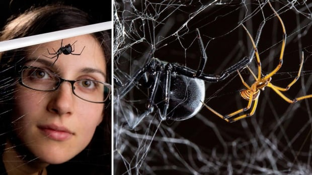 Catherine Scott, left, a PhD student in the Andrade lab at the University of Toronto Scarborough, captured the web's attention with tweets about what goes on in the webs of spiders she studies.