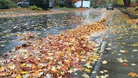 rainstorm autumn leaves block gutter
