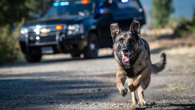 Dog Training Oromocto