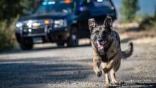 Police dog calendar