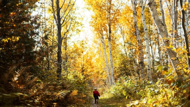 Photographer Gerry Kingsley's daughter on a walk in Sudbury's Laurentian Conservation area.