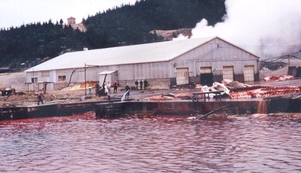 Dildo whale processing plant