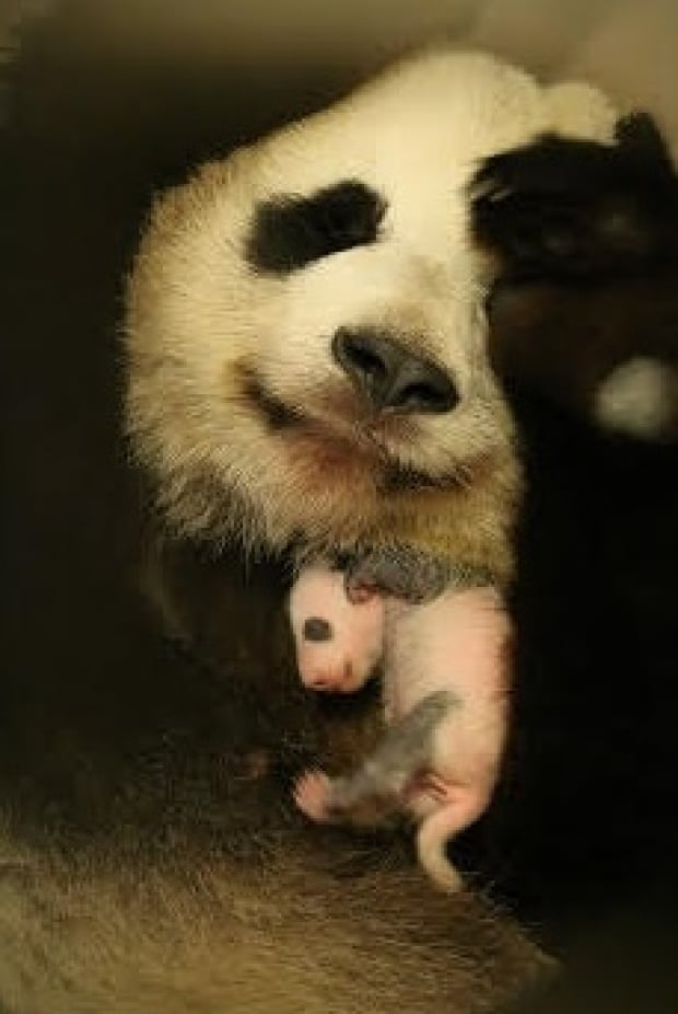 Er Shun and cub
