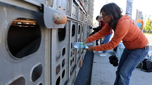 Anita Krajnc gives pigs water near a slaughterhouse in Burlington, Ont. Krajnc is on trial charged with criminal mischief charge for her act.