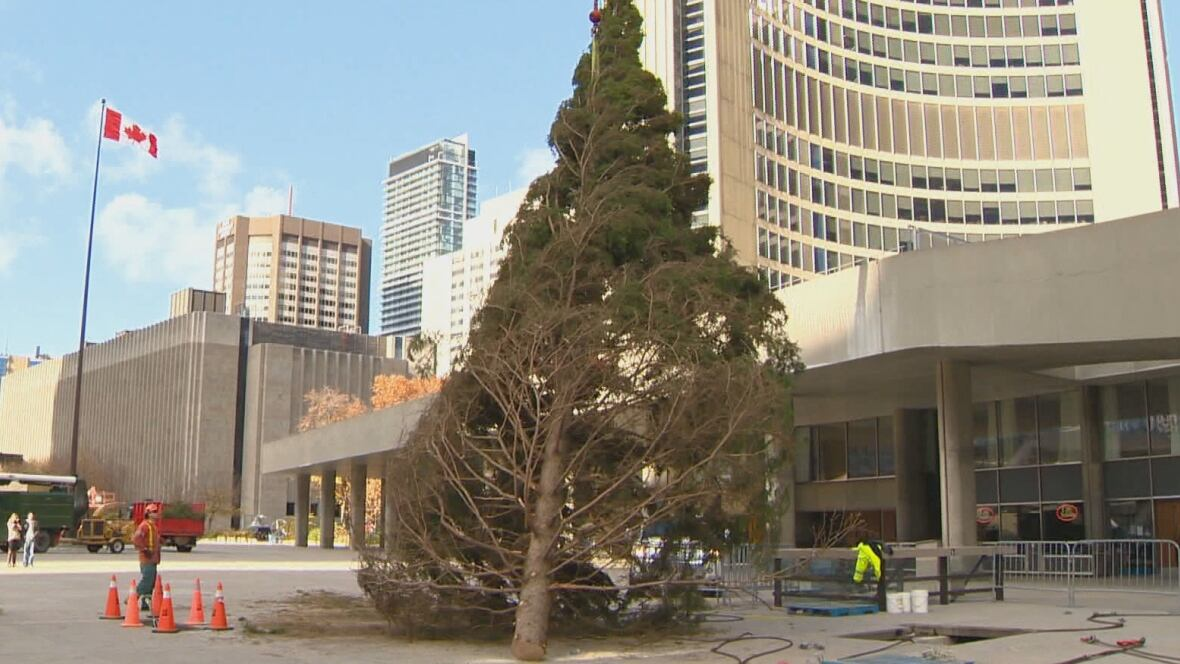 Mixed reactions greet arrival of city's Christmas tree - Toronto ...