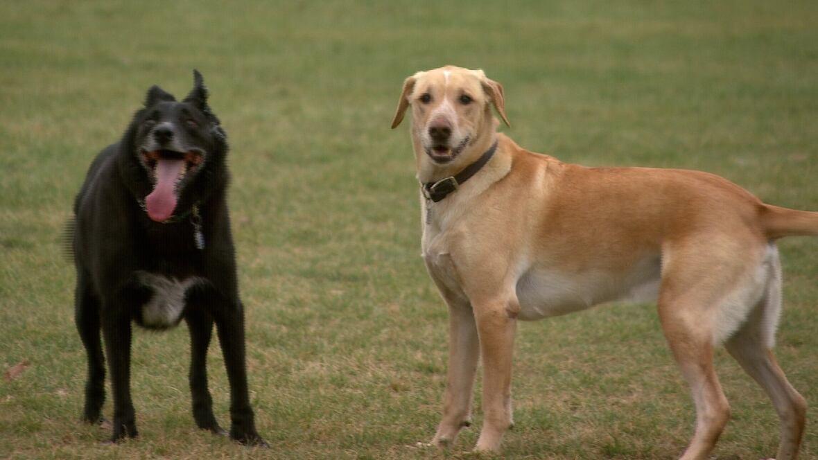 Barking Dog Pictures Winnipeg