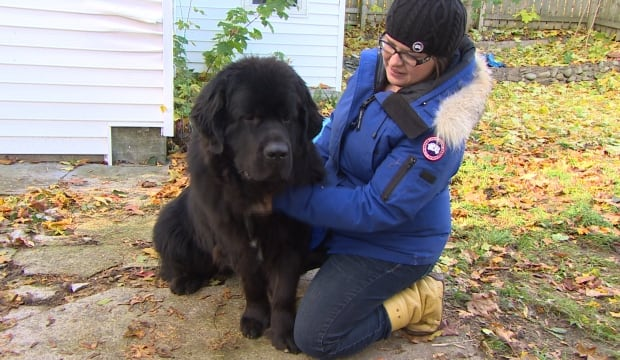 Newfoundland dog Silas and owner Sharon Dooling