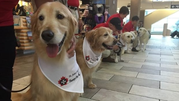 Therapy dog have been used across the country for a variety of reasons, including airports for travellers.