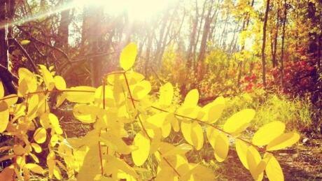 fall sunny day